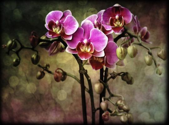 orquideas -estoy enamorada