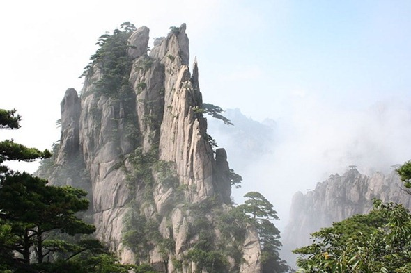 A forest in the clouds in Huangshan, China