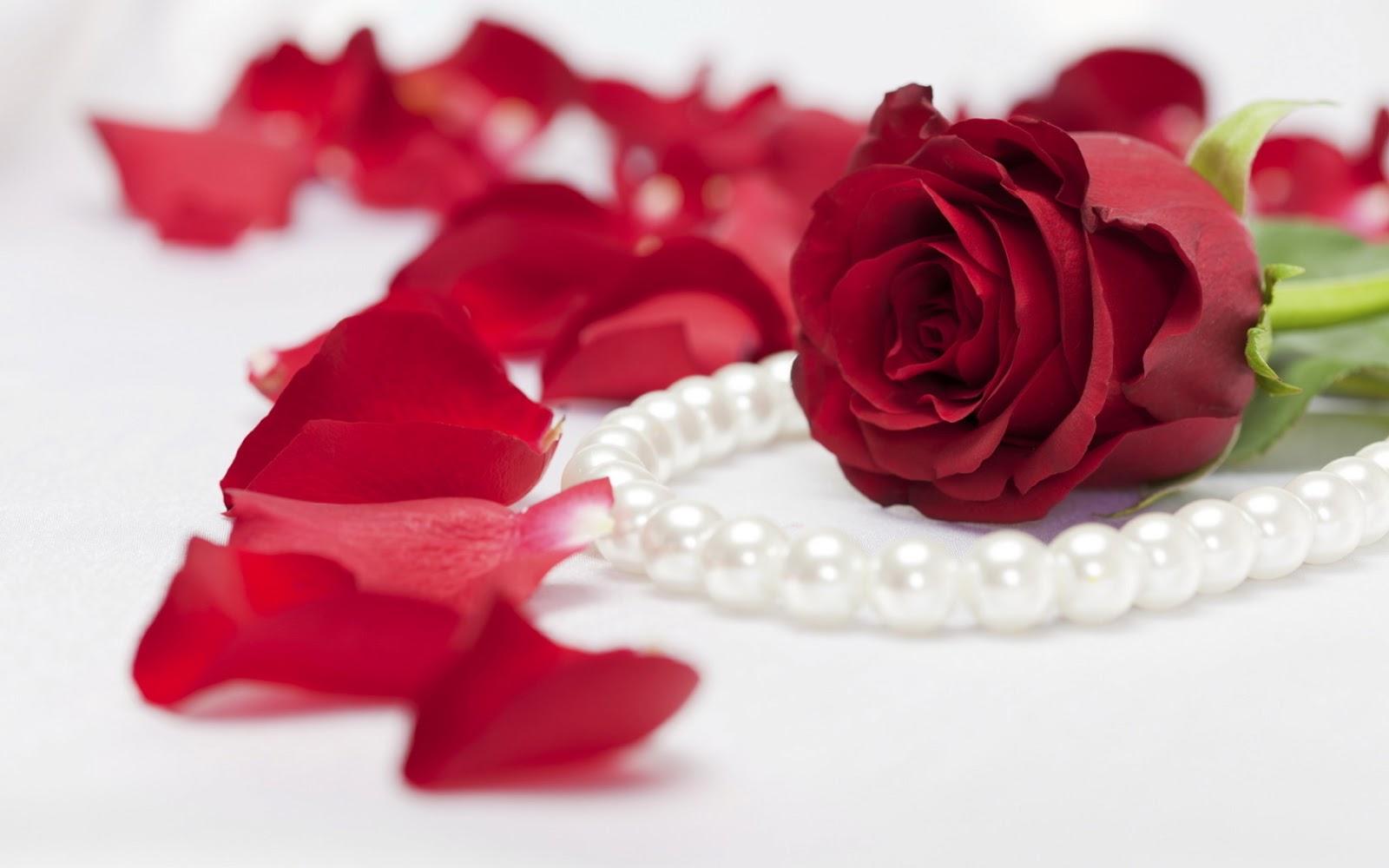 rose flowers - thumbgal