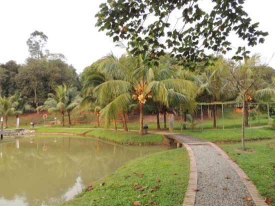 Local pond and coconut trees
