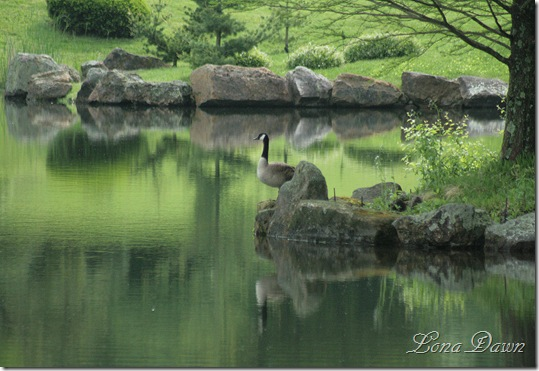 DA_JapaneseGarden_LakeGeese