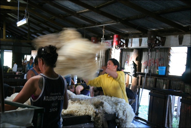 shearing fleece throw