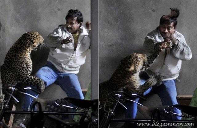 Kepala robek kena cakar harimau