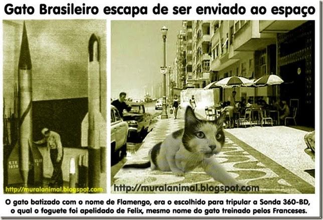 gato-espacial-brasileiro_thumb[1]