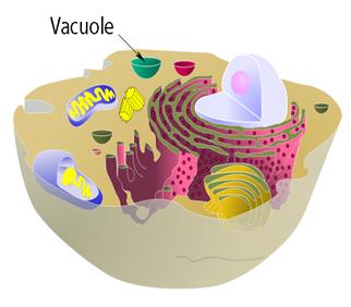 fungsi organel - organel sel