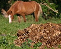 Лошадка пасется в поле