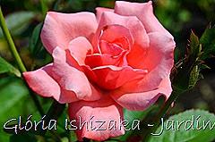 10  - Glória Ishizaka - Rosas do Jardim Botânico Nagai - Osaka
