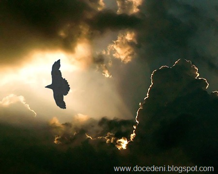 eagle-flies-in-dark-sky