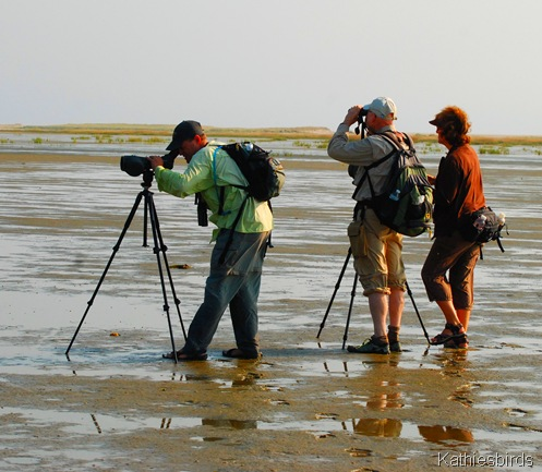 3. checking out birds-kab