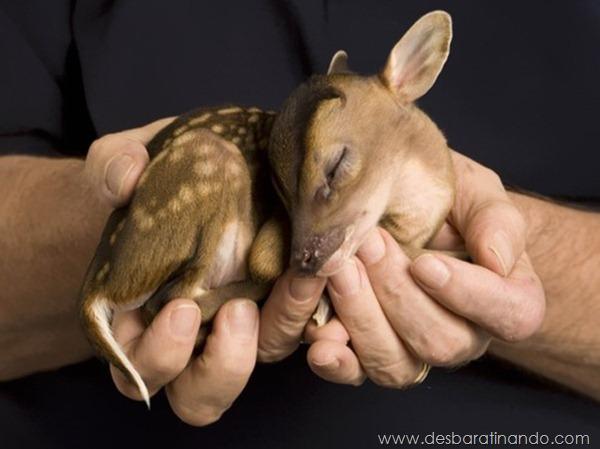 filhotes-de-animais-fotos-cute-cuti-desbaratinando (5)