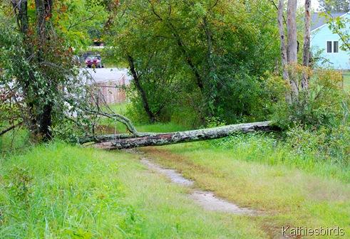 7. trees down-kab