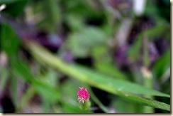 flor 8