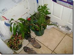 plants 013