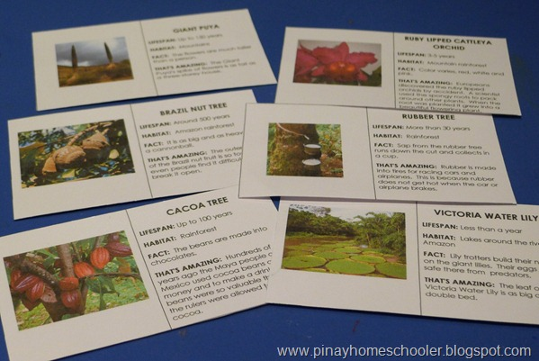 Plants of South America FREE Printable