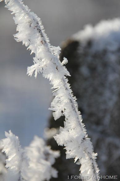 sneeuw Febr 2012 038