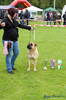 20100513-Bullmastiff-Clubmatch_31124.jpg