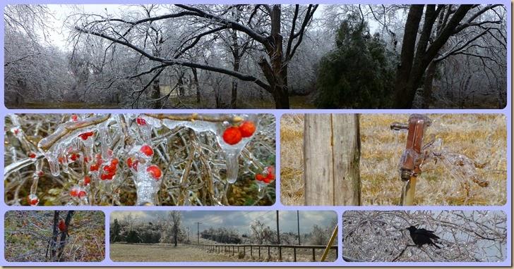 Ice Storm 12.22.13