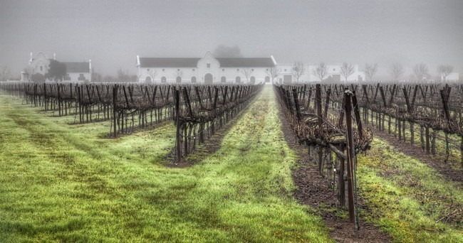 Winery in the Fog