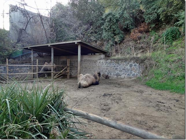 Santiago_Zoo_DSC03942