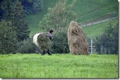 085 800X travaux agricoles ouest Lviv