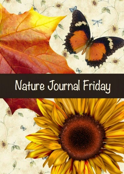 Nature Journal Friday - Nuts, Seeds, and Berries | From Blue Bells and Cockle Shells