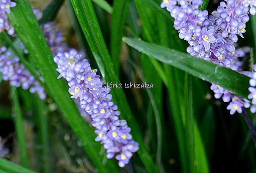Azul - Glória Ishizaka 31