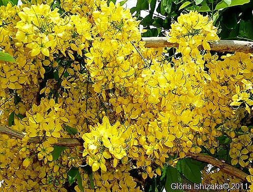 Glória Ishizaka - Guaiçara - Chuva de ouro 1