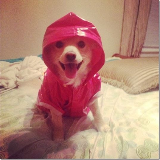 hurricane-sandy-dogs-23