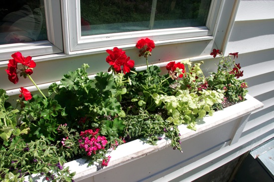 Windowbox2012 3