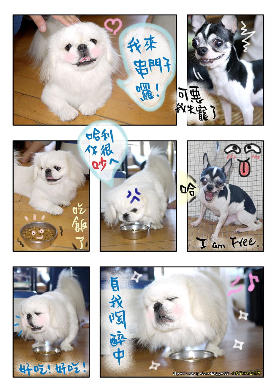 dog_blog2.jpg