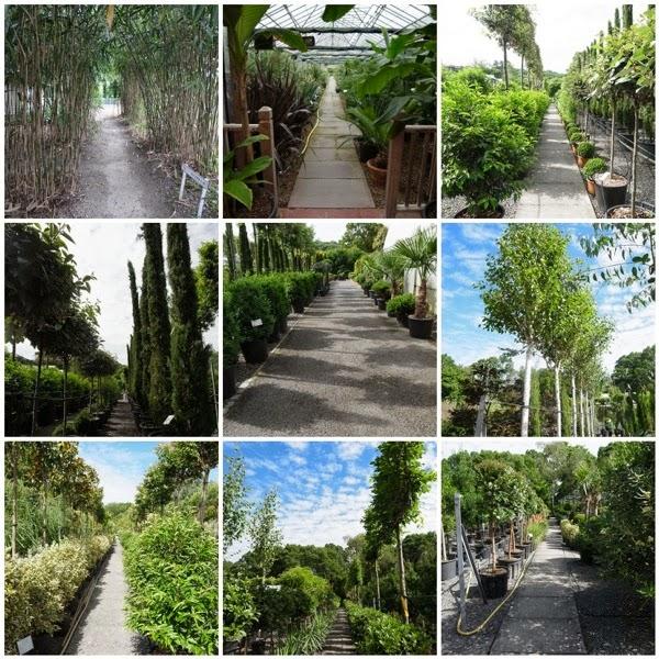 Architectural plants vistas