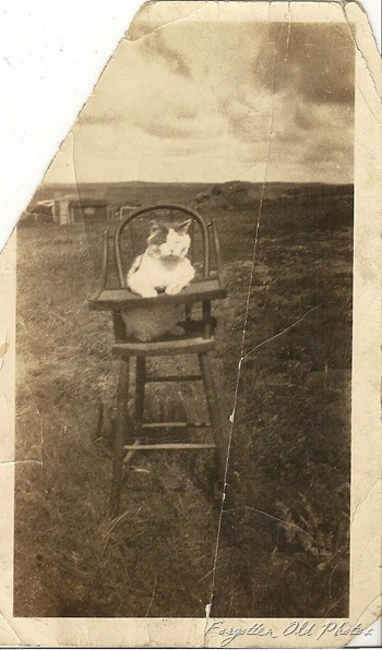 Cat in High Chair DL Antiques