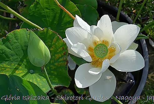 84 - Glória Ishizaka - Shirotori Garden