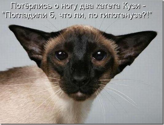 fbb2629177be793e9797460d5ee_prev