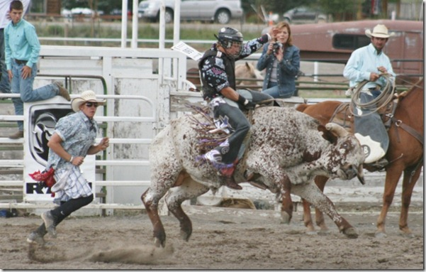 691 bull (640x406)