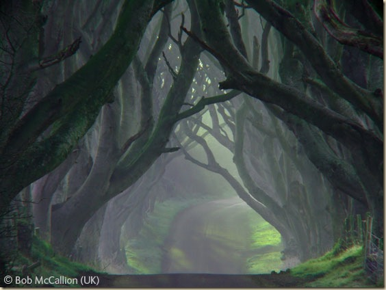 The-dark-hedges-010
