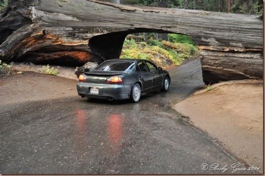 09-20-14 Sequoias 05