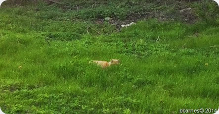 May 2 Feral Cat