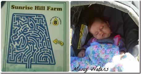 Many Waters Corn Maze and Sleeping Munchkin