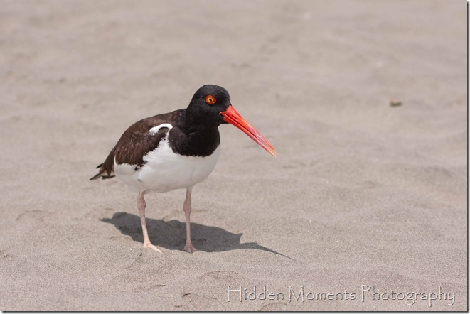 Beach Bird 1_sm