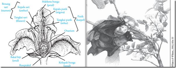 Struktur bunga Angiospermae