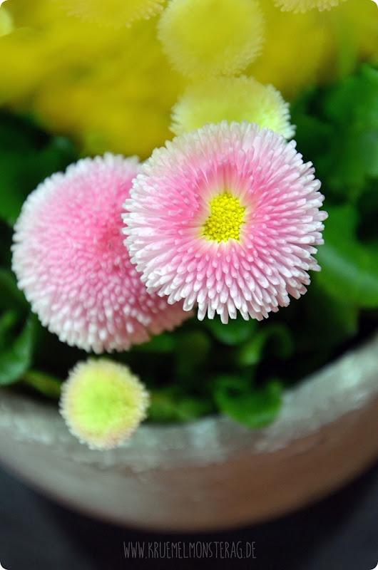 FF (08) gelbe Protea, gefüllte Tulpen, Kirschzweige und rosa Gänseblümchen