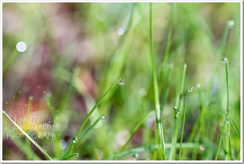 dewdrops-4751
