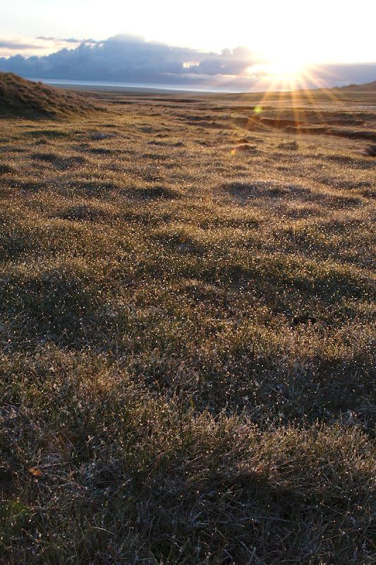 Soare cu dinti si fire de iarba inghetate.