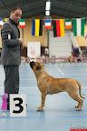 20130511-BMCN-Bullmastiff-Championship-Clubmatch-1857.jpg
