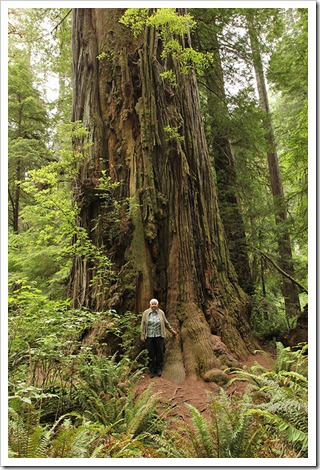 110714_Jedediah_Smith_Redwood_SP_52