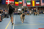 20130510-Bullmastiff-Worldcup-1160.jpg