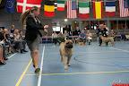20130510-Bullmastiff-Worldcup-1160.jpg