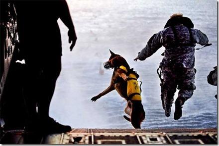 SEAL_Dog
