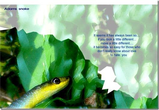 adams snake-004